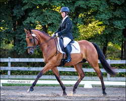 Dressage is the foundation work!