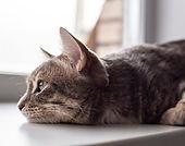 Cat-Thumb.jpg
