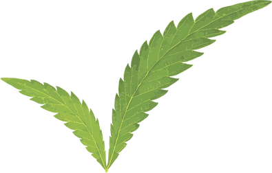 A cannabis leaf in the shape of a check mark for cannabis quality control.