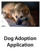Dog Adoption-Thumb.jpg