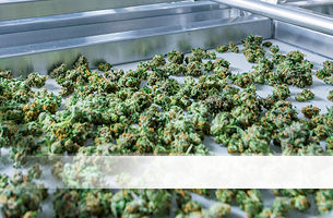 Contamination control of a silver tray of cannabis.