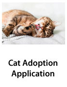 Cat Adoption - Thumbs.jpg