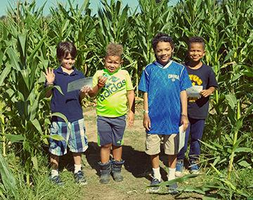 Corn Walk1.jpg
