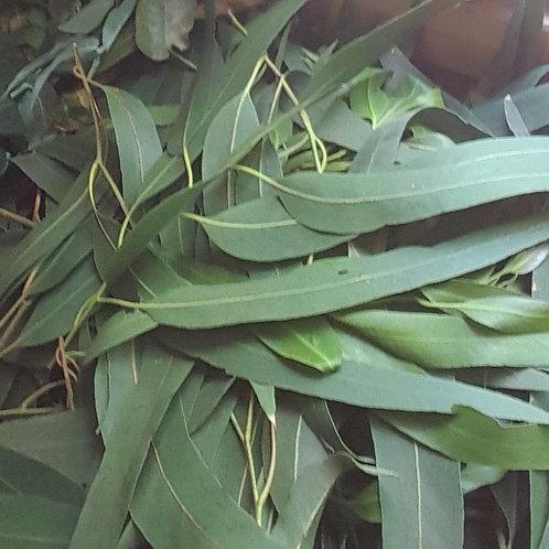 Eucalyptus Leaves Banana Leaves Oval leaves
