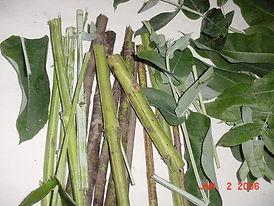 Eucaluptus Branches & Chew Sticks