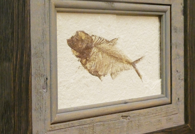 smallfishdet2a.jpg