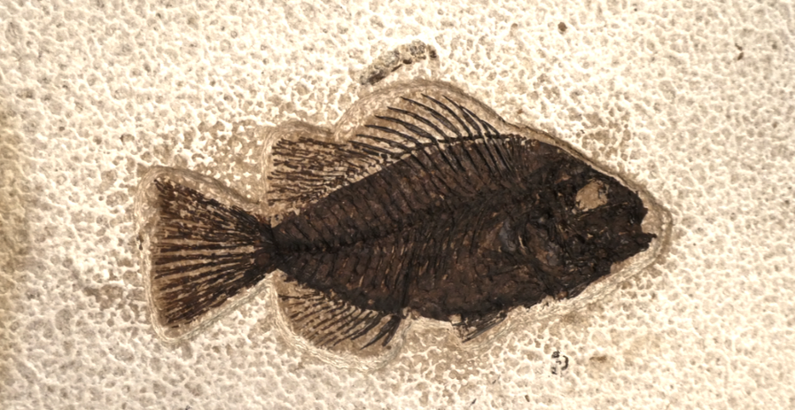 fish1detail.png