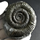 Thumbnail: MOUNTED WHITBY AMMONITE