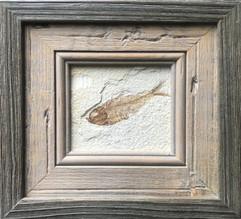 small fish 1.jpg