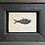 Thumbnail: FOSSIL FISH DISPLAY