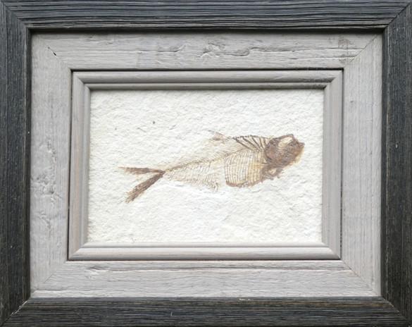 fish last main.jpg