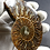 Thumbnail: LARGE CLEONICERAS AMMONITE