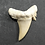 Thumbnail: FOSSILISED SHARK TEETH