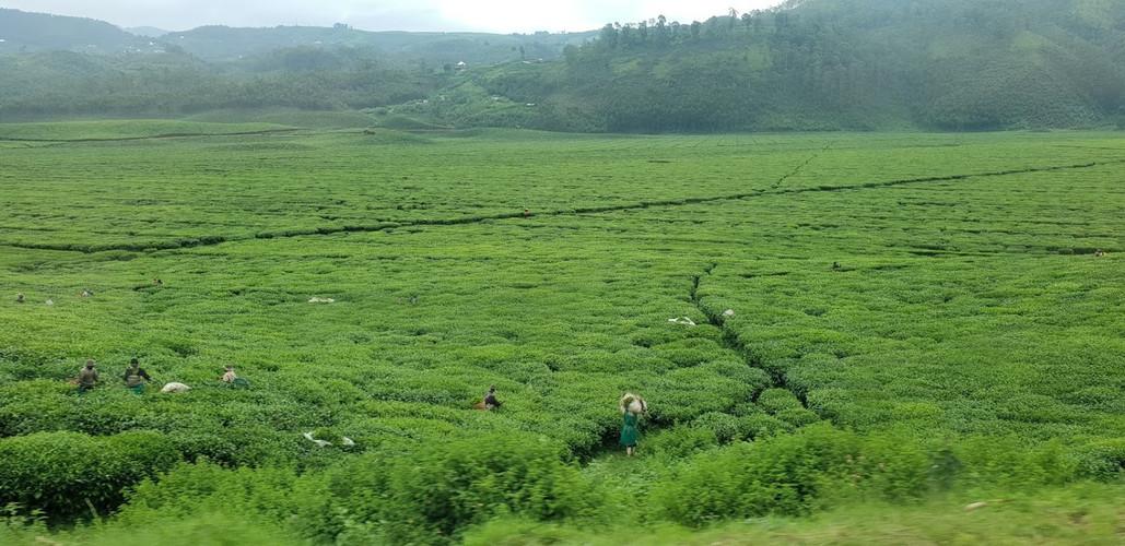 Nyirahindwe - Benefiting the local population
