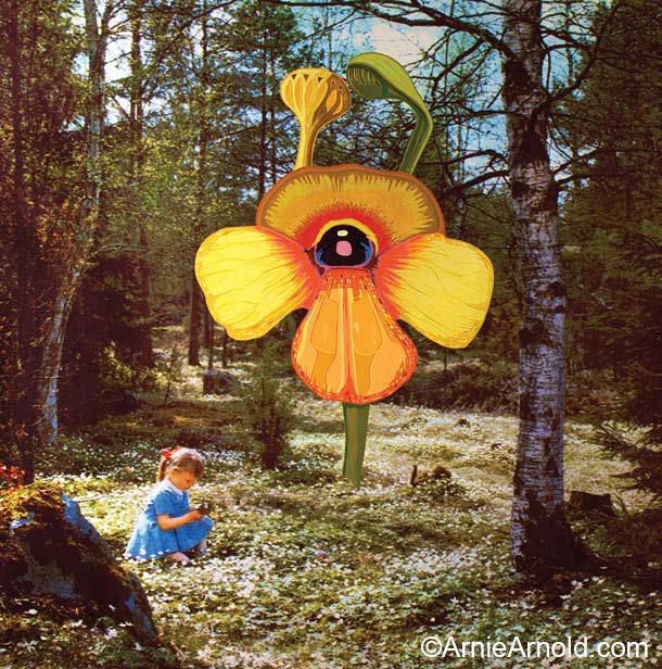 Sun Orchid