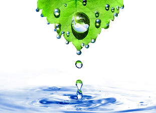 green leaf with water drops and splash i
