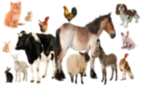 animaux1.jpg