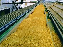 Grain-1.jpg