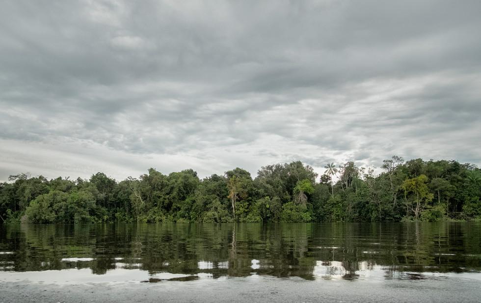 Imagine un mundo donde tierra y agua son lo mismo y no existe usted para diferenciarlas. Río Inírida. 2019.