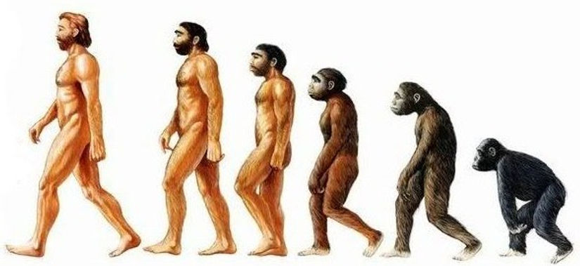 human_evolution_edited.jpg