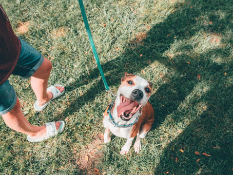 Best Dog Parks In Atlanta