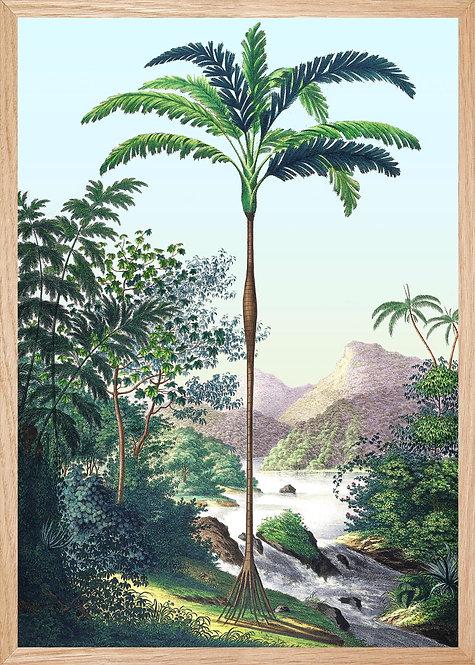 Illustration  SUR LES RIVES DE JAPURA