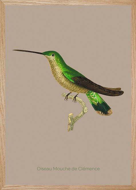 Illustration  Oiseau Mouche de Clémence