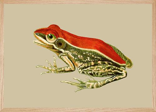Illustration murale GRENOUILLE rouge