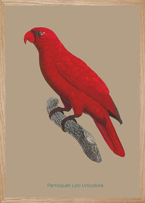 Illustration  Perroquet Lori Unicolore