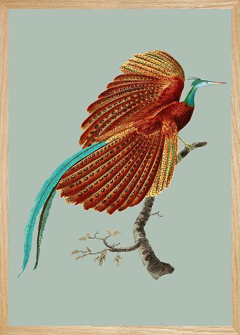 Illustration  Oiseau de feu