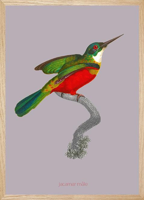 Illustration murale Jacamar mâle