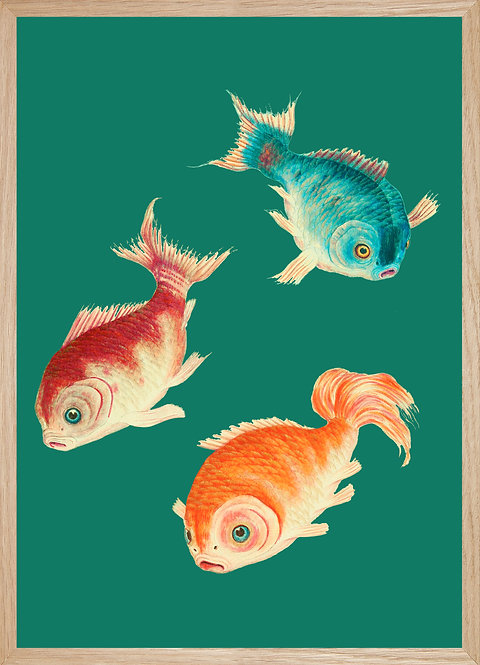 Illustration  CARPES JAPONAISES