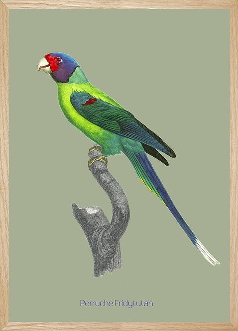 Illustration  Perruche Fridytutah