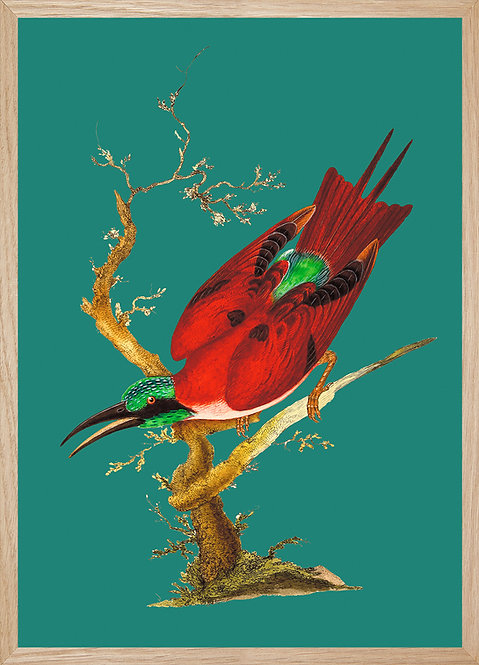Illustration murale Cardinal