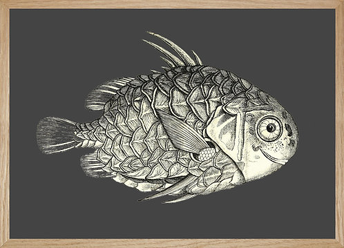 Illustration  POISSON ANANAS