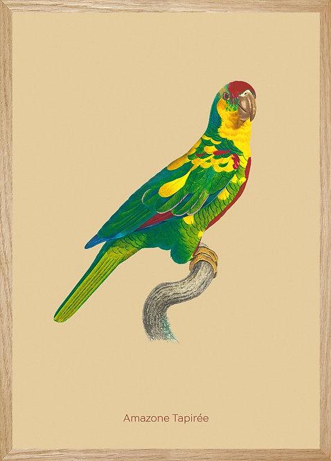 Illustration  Amazone Tapirée Jaune