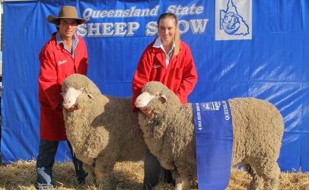 QLD State Sheep Show // Media Coverage // QCL