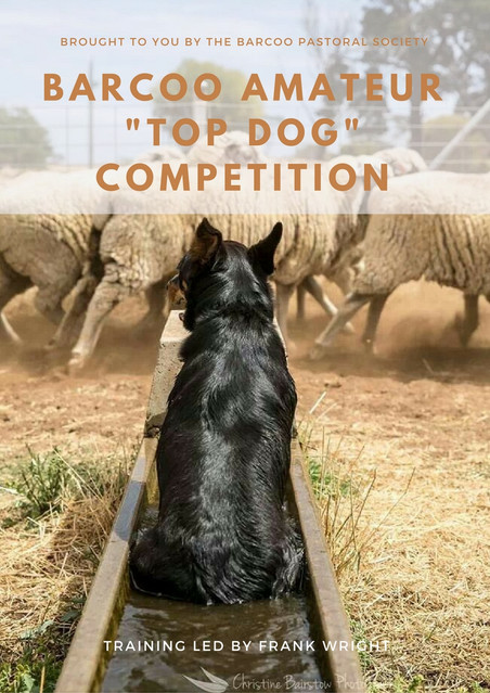 """Barcoo """"Top Dog"""" Competition"""