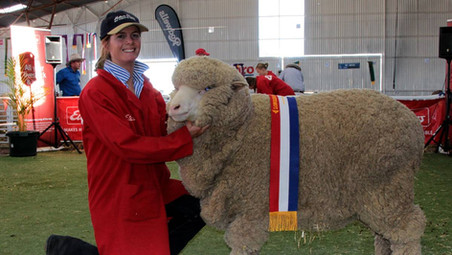 BLACKALL TO HOST THE 2018 QUEENSLAND STATE SHEEP SHOW