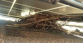 Bird-Nest-Solar-Panel.jpg