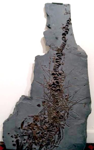 Ichthyosaur Holzmaden, GE