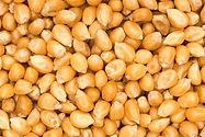 Yellow Maize.jpg