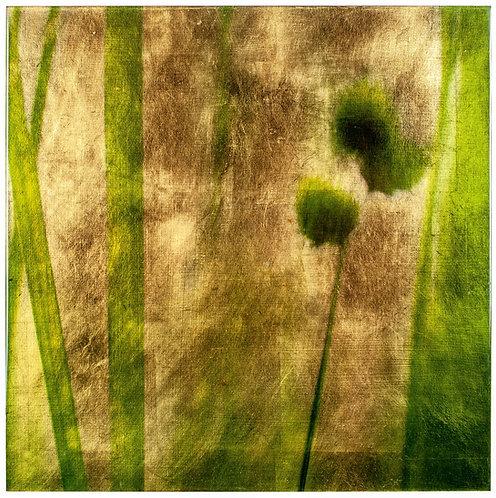 Golden Grasses #6687 #1