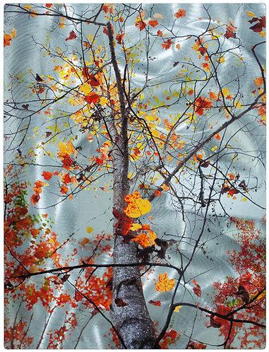 Colorful Fall Tree (San Ramon, CA)