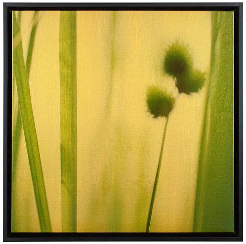 Golden Grasses #6687 #5.