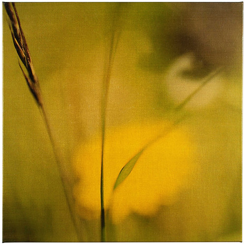 Golden Grasses #7797 #1