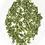 Thumbnail: Té verde Sencha