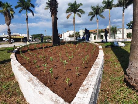 Prefeitura planta 6 mil mudas de flores na Rotatória da Vila União