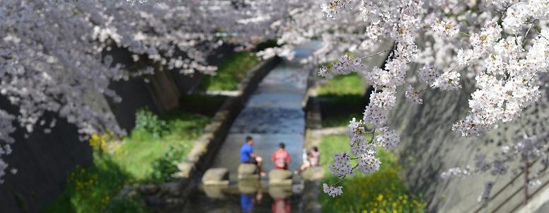 花みずきの近くを流れる志井川