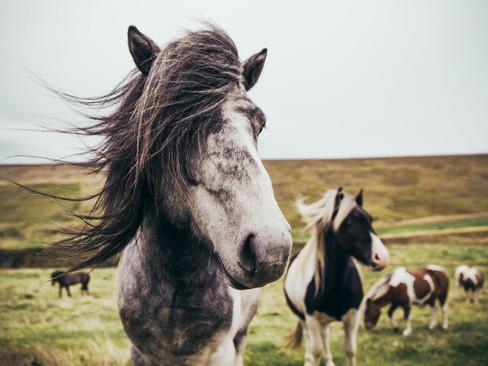 Equi-coaching et respect du cheval
